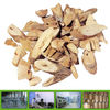 Super chinese angelica extract supplier,100% natural chinese angelica P.E.
