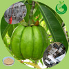 Factory supply plant extract garcinia cambogia extract side effects