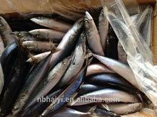 Frozen mackerel new landing 2015