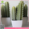 Artificial opuntia pot with regular teeth for decortion