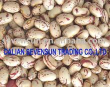 Beans 2014 new crop, kidney beans