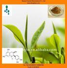 Green Tea Extract Powder(plant extract)