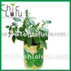 can herb /mini plant