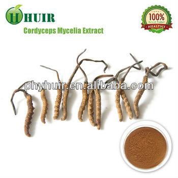 Cordyceps extract 40%