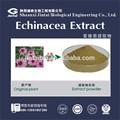 Polifenoles 4.0% uv echinacea extracto de polvo
