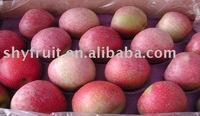 Chinese luochuan best price fresh qinguan apple(hot)!