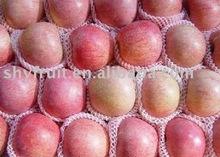 Export luochuan sweet qinguan apples(hot)!