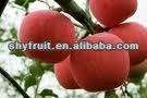 Supply shaanxi fresh fruit (HOT)!!!