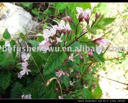 Herb plant Rabdosia Rubescens Extract powder 98% 99% ORIDONIN