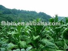 High quality Nicotiana Tabacum P.E.(40%-90%Solanesol)