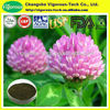 100% Natural Red Clover Isoflavones Extract Powder