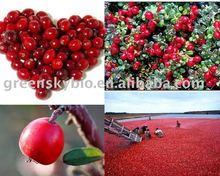 Cranberry Extract Powder Procyanidin