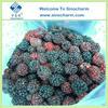 IQF Frozen Blackberry Frozen Fruit