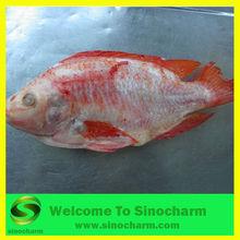 Frozen Tilapia Fish G&S