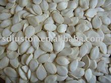 snow white pumpkin seed
