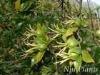 Fructus Gardeniae P.E. 8:1 10:1
