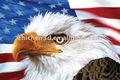 3d fotos egales/3d pintura eagles/3d egales