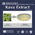 Usine de poudre de racine de kava extrait naturel 10:1