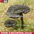 Shell- rota ganoderma lucidum spore cápsula