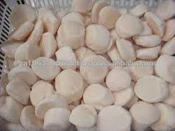 Quality Frozen Sea Scallop