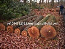 Oaks wood Logs