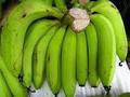 vietnam de banano cavendish