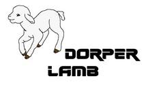 Dorper Lamb ( HALAL,ISO,HACCP)
