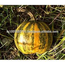 Óleo de semente de abóbora NATURAL indiano
