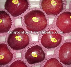 Fresh Huaniu Apple 2012 New Crop