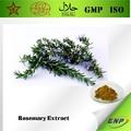 Gmp& kosher bnp suministro de extracto de romero rico en rosemarinic& de ácido carnósico ácido