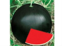 NOFA 3 pure black seedless watermelon seeds for sale