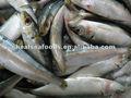 Cebo sardinas