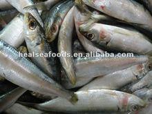Bait Sardines