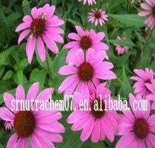 High quality Echinacea Purpurea Extract