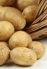 2014 Shandong new crop Fresh Potato in Various Pack