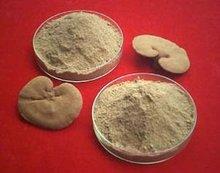 Ganoderma Extract 16:1 or customerized