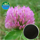 Pure Natural Red Clover Extract in various specification Isoflavone