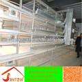 Sıcak- satış kaliteli broiler/katmanı kafesi tavuk