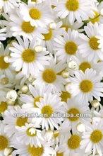 Digital floral photographs wall art on fabric printing