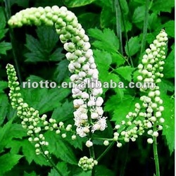 Top quality Natural organic black cohosh extract