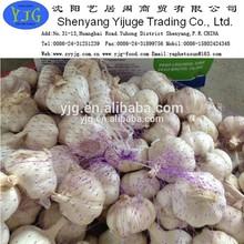 2014 fresh garlic pure white/normal white from shandong