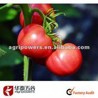 hybrid seeds vegetable seeds tomato TM759seeds