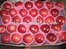 China apple factory