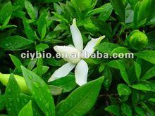 Cape Jasmine Fruit Extract Geniposide
