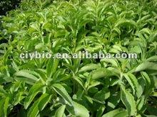 Stevia extracto de hoja de esteviosido