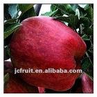 2012 new fresh fruit Apples