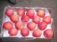 New Fresh Red Gala Apple