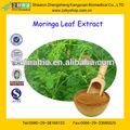 De haute qualité extrait de feuilles de moringa 10:1