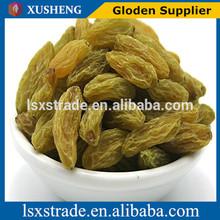 2014 Chinese healthy dried raisins / dried golden raisins/dry fruits