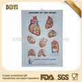 Pvc geprägt 3d medizinische poster, medizinische diagramm, Anatomie plakat